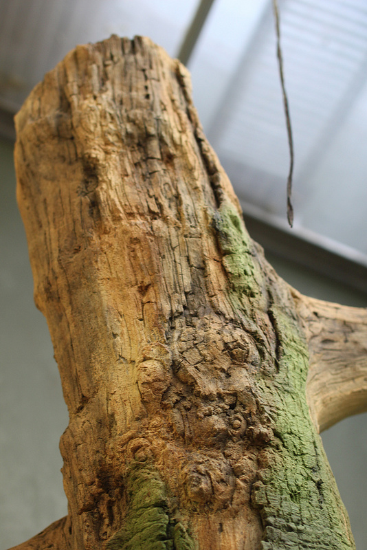 detail of artificial tree in zoo enclosure