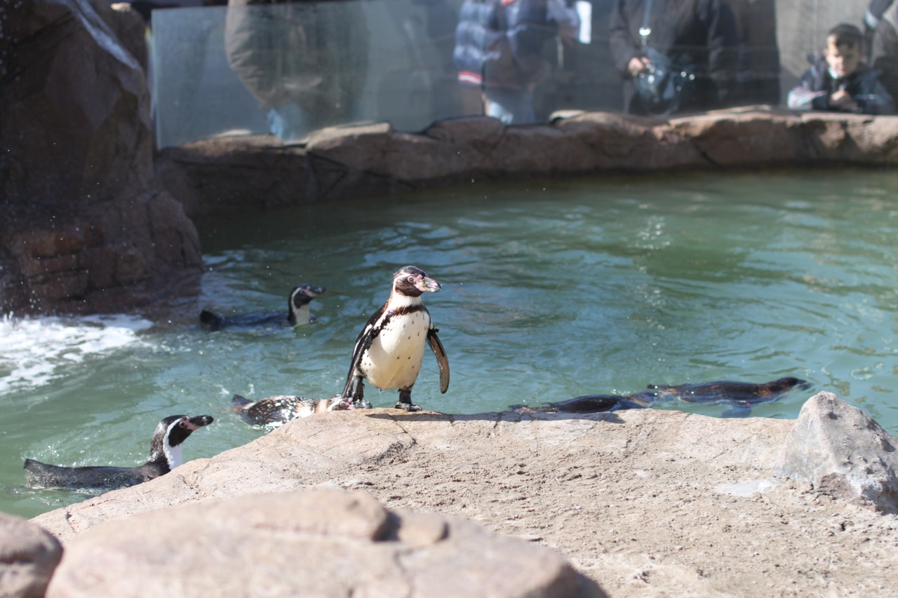Penguin come on to dry land.