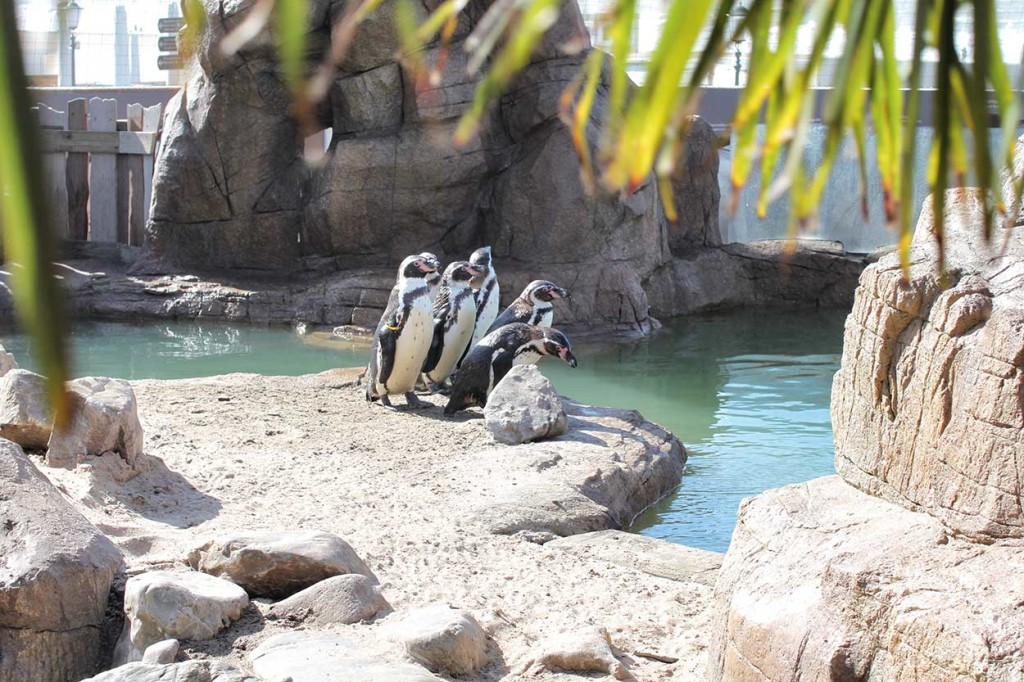 Artificial rock and pool in Humboldt penguin exhibit