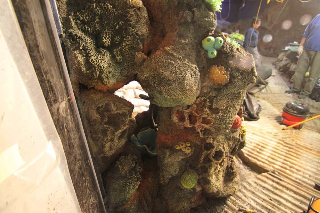 artificial coral in public aquarium.
